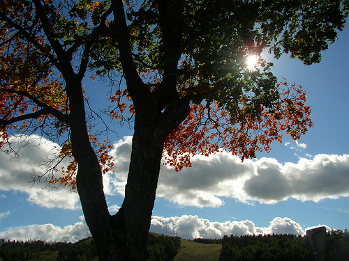 tree-against-blue-sky-and-clouds